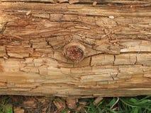 质地树干 库存照片