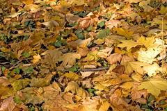 地毯叶子 免版税库存图片
