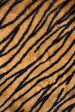 地毯打印老虎 免版税库存图片