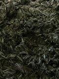 地毯毛皮黑暗的纹理背景 库存照片