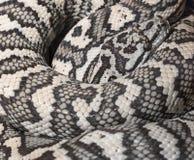 地毯Python墨瑞利亚spilota 免版税库存照片