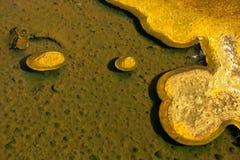 地热的细菌 库存照片