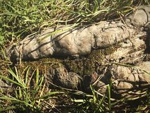 地球、草和青苔的树的根的宏观照片 图库摄影