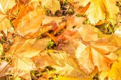 地球上的叶子 图库摄影