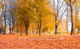 地球上的叶子 免版税图库摄影