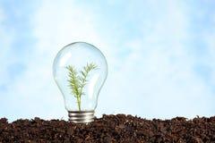 地球上的电电灯泡与植物 库存图片