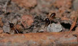 地球上的白蚁 库存照片