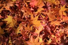 地球上的红槭叶子 免版税库存照片