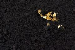 黑地球上的金黄硬币 库存图片