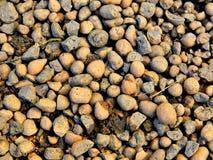 地球上的黏土 库存照片