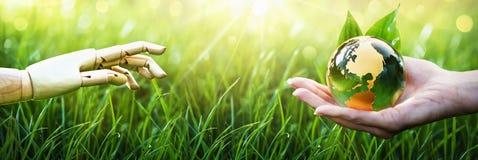 地球保存 绿色行星在您的手上 背景关心概念环境查出小的作为结构树白色 库存照片