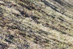 地球和在温暖的春天太阳的光芒的下熔化雪的表面与去年的草的 免版税库存照片
