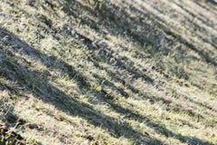 地球和在温暖的春天太阳的光芒的下熔化雪的表面与去年的草的 库存照片