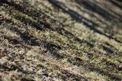 地球和在温暖的春天太阳的光芒的下熔化雪的表面与去年的草的 库存图片