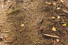 地球在有叶子、裂片、枝杈和针的森林里 库存图片