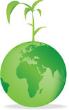 地球幼木 库存图片