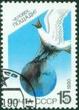 地球海鸥 库存照片
