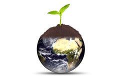 地球生长工厂 免版税库存照片