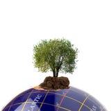 地球生长结构树 图库摄影