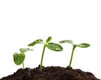 地球的,新的生活的概念年幼植物 图库摄影