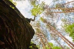 地球秀丽-对天空 生长岩石结构树 免版税库存照片