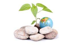地球移植结构树 免版税图库摄影