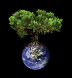 地球结构树 库存照片
