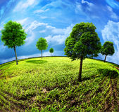 地球结构树 免版税库存图片