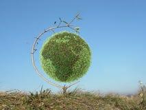地球绿色结构树 库存图片