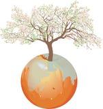 地球-苹果树 免版税库存照片