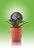 地球eco 免版税库存图片