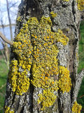 地衣和青苔在树 免版税库存照片