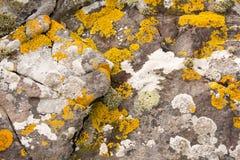 地衣和青苔在石头 免版税库存图片