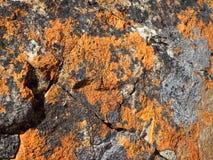 地衣岩石背景 库存照片