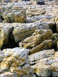 地衣海滩岩石 免版税库存照片