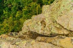 地衣盖的石头特写镜头 免版税库存照片