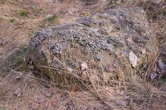 地衣石头 库存图片
