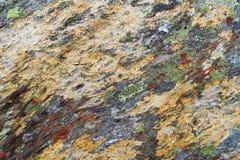 地衣纹理在石头的 库存图片