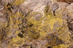 地衣纹理在石头的 免版税库存照片