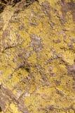 地衣纹理在石头的 免版税图库摄影