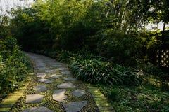 地衣隐蔽的道路在晴朗的冬天早晨中植物  免版税库存照片