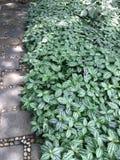 地被植物植物 免版税库存照片