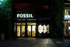 地道化石商店,奥兰多, FL 库存图片
