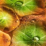 从满地露水的叶子的背景 免版税图库摄影