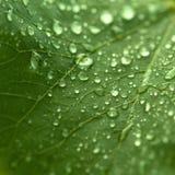 满地露水的叶子 免版税库存照片