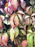 满地露水的秋天叶子 免版税库存图片
