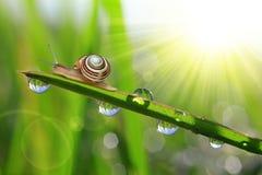 满地露水的草蜗牛 免版税库存图片