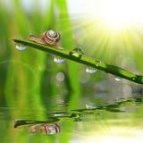满地露水的草蜗牛 免版税库存照片