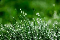 满地露水的绿草 免版税库存图片