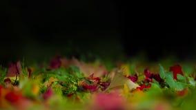 地面叶子 免版税图库摄影